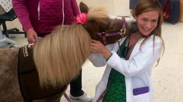 Pediatric Residents at Floating Hospital for Children Louisa and pet therapy mini horse Lily.